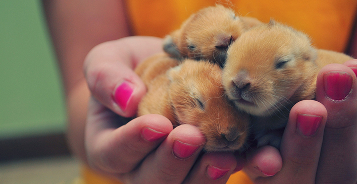 Handful of Baby Bunnies